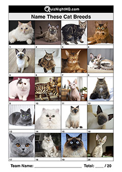 cat breeds animal trivia picture quiz round